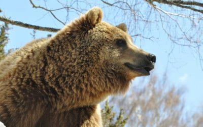 Pradinas (12) : parc animalier