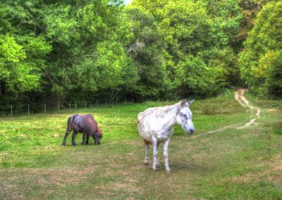 La mule de la bastide d'Albignac Tarn