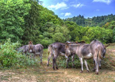 Les ânes de la Bastide d'Albignac